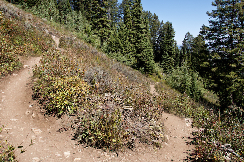 04 Lupine Meadows hike trail 2015-08-31_9