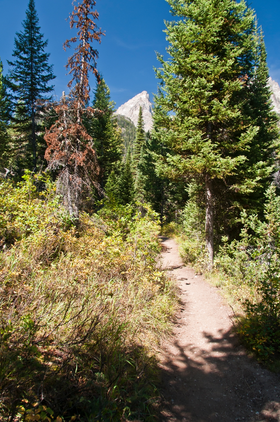Lupine Meadows hike trail 2015-08-31_4